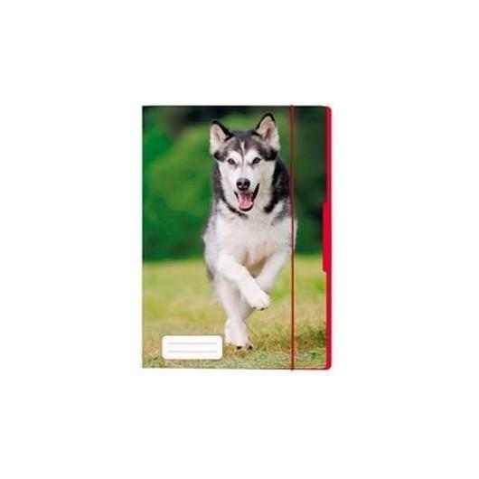 Teczka rysunkowa A4 z gumką Pies