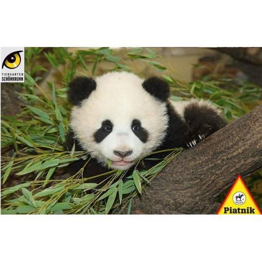 Puzzle 1000 - Mała panda PIATNIK