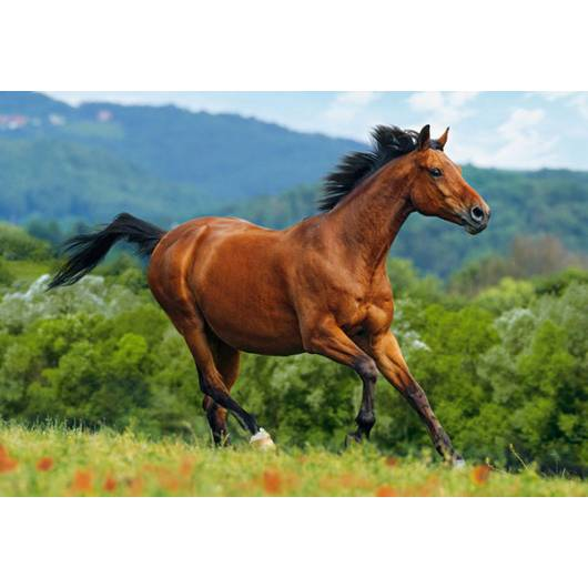 CASTOR 1000 EL. Brązowy Koń